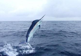 Costa Rica Fishing Questions | Tico Travel