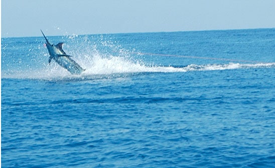 Costa Rica Marlin Fishing | Tico Travel