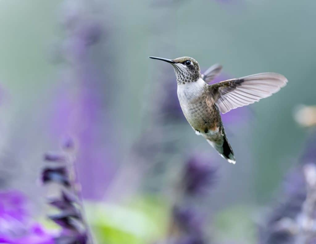 Photographing hummingbirds in Costa Rica